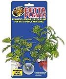 Betta Plant - Window Leaf