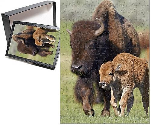 Photo Jigsaw Puzzle of Bison (Bison bison) cow and calf in the spring, Yellowstone National Park