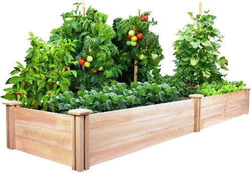 Raised Garden Beds Cedar Vs Redwood Pros And Cons