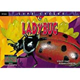 Lady Bug (Life Cycles)