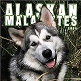 Alaskan Malamutes 2004 Calendar