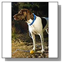 Don Sullivan Perfect Dog Fast Results Pet Training Package, Large
