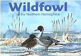 Wildfowl of the Northern Hemisphere