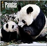 Pandas 2015 Square 12x12 (Multilingual Edition)