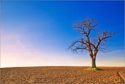 Canvas print Natural landscape with Tree by Fine Art Images - ready-to-hang wall picture, stretched on canvas frame, printed image on pure canvas fabric, canvas print size: 30 x 20 cm