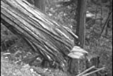 Historic Forestry Films DVD: 1920-1957 Logging Industry & National Forest Movies, including Redwood, Maple, Pine, Timber, Lumber, Sawmill & Wood Mills