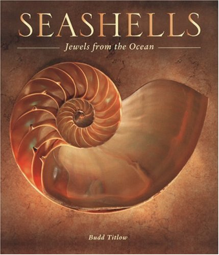 Seashells: Jewels from the Ocean