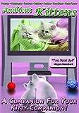 echange, troc Ambient Kittens [Import anglais]