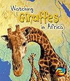 Watching Giraffes in Africa (Wild World)
