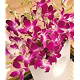 Oriental Orchidsby Bunches