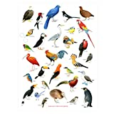 Bird Chart by Christine Berrie