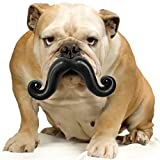 Moody Pet Humunga Stache Junior Dog Toy for Medium-Large Dogs