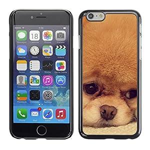 Cover - pomeranian japanese spitz puppy dog - Apple iPhone 6 Plus 5.5