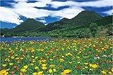 パズルの達人 1500ピース 由布岳を望むポピーの園-大分 15-511