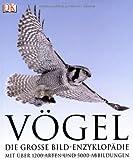 Vögel: Die große Bild-Enzyklopädie mit über 1200 Arten und 5000 Abbildungen