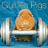 Avonside Publishing GUINEA PIGS