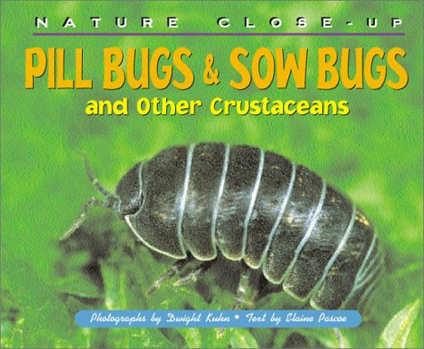 nature-close-up-pill-bugs-sow-bugs-and-other-custaceans