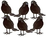 Halloween Black Feathered Small Crows - 6 Pc Black Birds Ravens Props Décor Halloween Decorations Birds