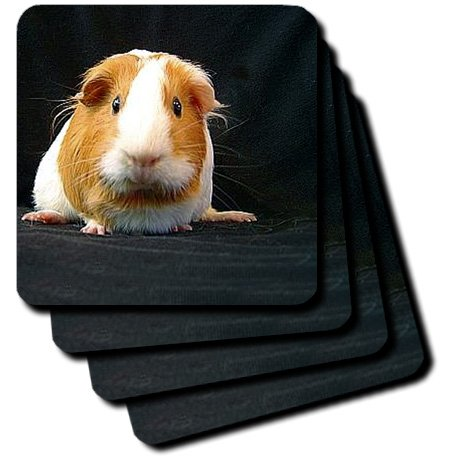 Guinea Pig Soft Coasters, Set of 4