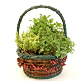 51VP6yoB6WL. SL160  Herb Garden in Decorative Gift Basket   Edible Herbs   Green Gift that Ships Via 2 Day Air!