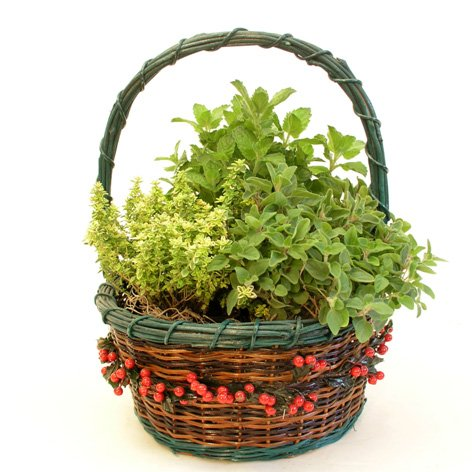 Herb Garden In Decorative Gift Basket   Edible Herbs   Green Gift That  Ships Via 2