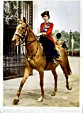 1951 PRINCESS ELIZABETH GRENADIER GUARDS HORSE FLOWERS