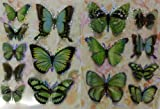 Set of 2 3D Fly Stickers (Butterfly) (Multi Green)