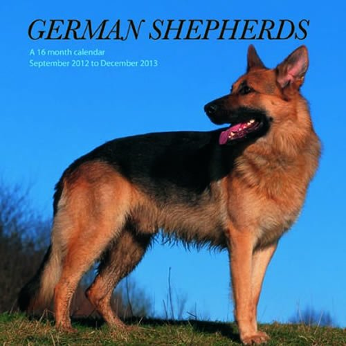 German Shepherds September 2012 to December 2013 Calendar