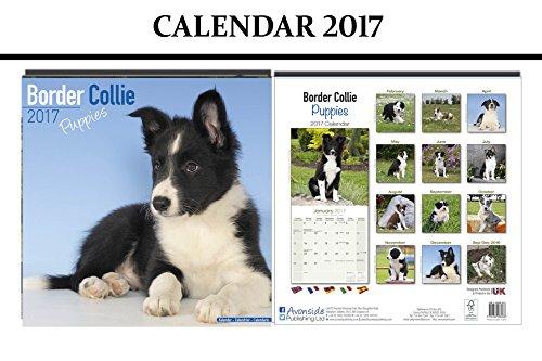 border-collie-puppies-dogs-calendario-2017