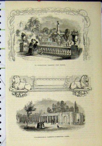 Old Original Antique Victorian Print Zoological Gardens Bridge Carnivora Cages 262A193