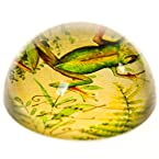 Frog Crystal Paperweight