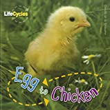 Egg to Chicken (Life Cycles (QEB Publishing))