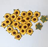 50 Pcs Sunflower Mulberry Paper with Brown Center 2 Layers Flower Craft Project 1 inch