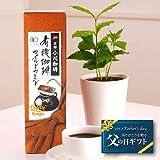 【送料無料!遅れてもうれしい父の日フラワーギフト】小川珈琲とコーヒーの木のセット【お届6/18〜】