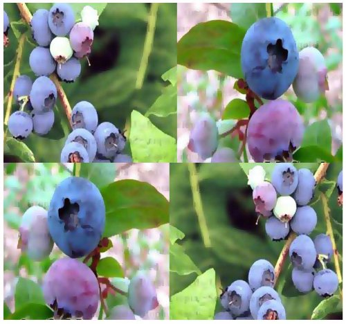 100 X Highbush Blueberry Plant Seeds - Bulk Seeds - Ornamental Edible X 6 Varieties Mix - Beautiful White Blooms Turn Into Berries - Zones 5 - 9 - By Myseeds.Co