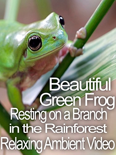 Beautiful Green Frog Resting on a Branch in the Rainforest Relaxing Ambient Video