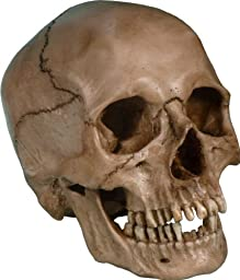 Life Size Model Human Skull Replica Aged EARTH-BROWN Relic - Life Size Reproduction By Nose Desserts