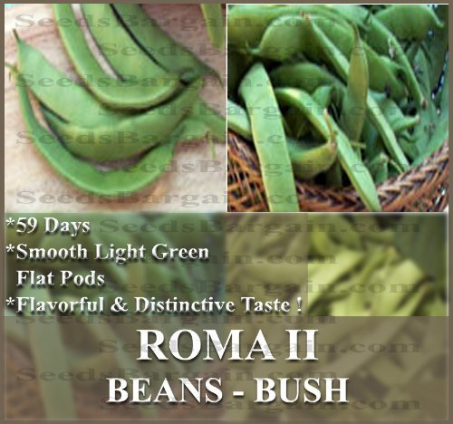 the-dirty-gardener-roma-ii-bush-beans-900-seeds-1-pound-by-the-dirty-gardener
