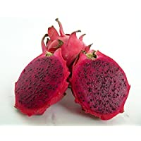 American Beauty Dragon Fruit - Hylocereus - Pitaya/Strawberry Pear - 4