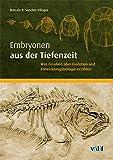 Image de Embryonen aus der Tiefenzeit: Was Fossilien über Evolution und Entwicklungsbiologie erzählen