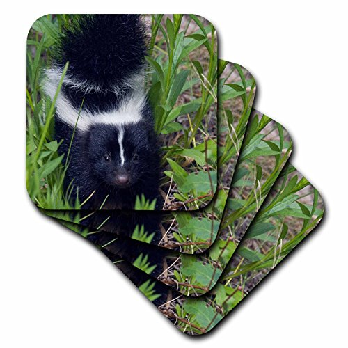 Skunk Coaster Set<br>Set of 4 Coasters