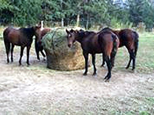 Round Bale Slow Feed Hay Net 6x6 1 3/4 Hole (Slow Feed Horse Hay Net compare prices)