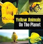 Yellow Animals On The Planet: Animal...