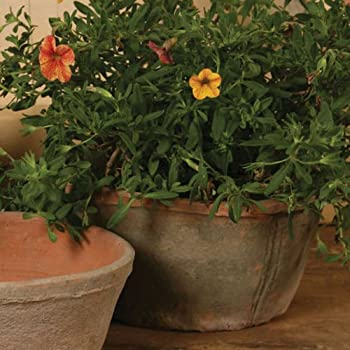 Rustic Terra Cotta Oval Pot