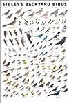 Sibley's Backyard Birds: Western Nort...