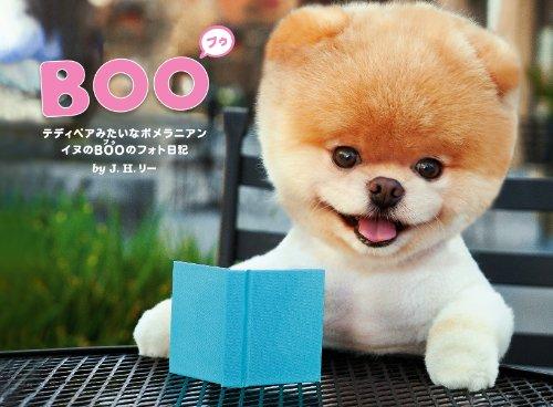 BOO イヌのブゥのフォト日記