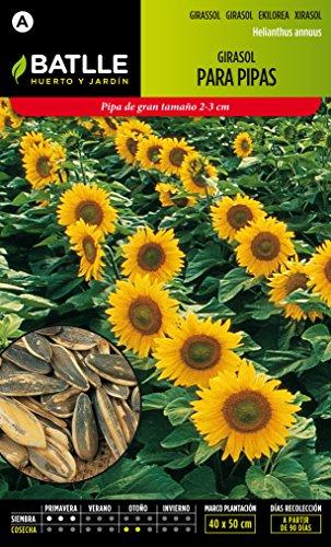 semillas-batlle-097337bols-girasol-para-pipas