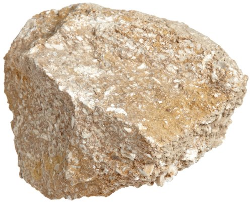 American Educational Buff Fossiliferous Limestone Sedimentary Rock, 1 Kg