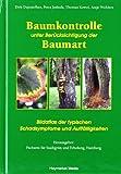 Baumkontrolle unter Berücksichtigung der Baumart: Typische Schadsymptome und Auffälligkeiten