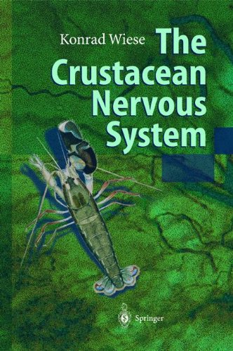 The Crustacean Nervous System